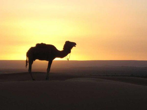 fes to marrakech tour