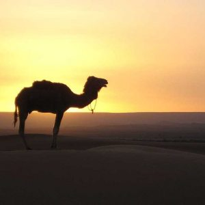 trip from marrakech to fez