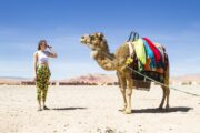 shared marrakech to fes desert tour 3 Days marrakech to fes desert tours
