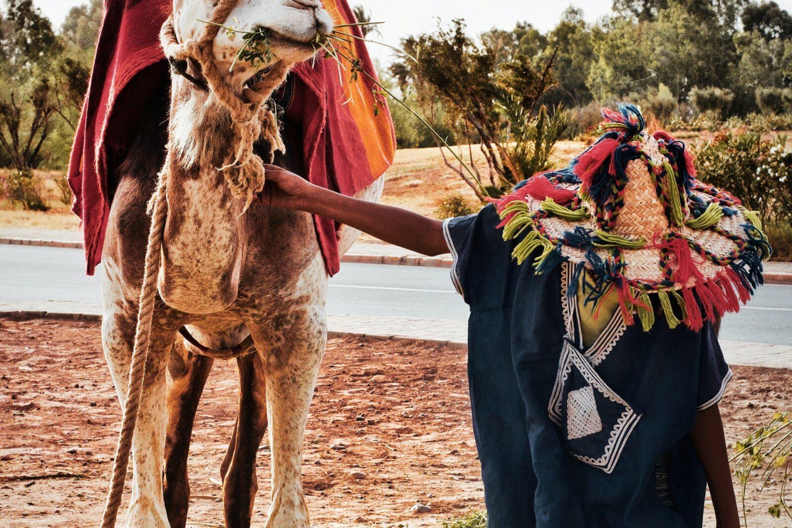 pexels adam b 3123690 - Morocco camel trekking tours | Morocco Desert Camp | Camel Trekking In Merzouga