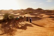 Fes To Marrakech Desert Tour 8 Days   Fes Desert Trips   Morocco Tours 8 Days