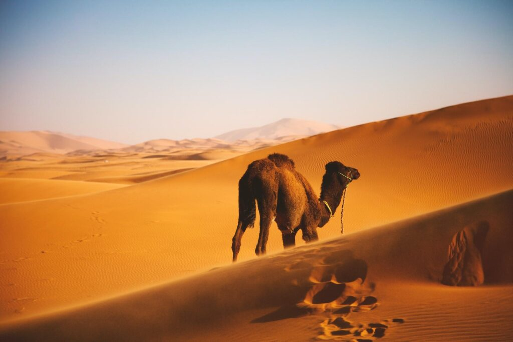 ben ostrower i Z1o10BPPk unsplash 1024x683 - Guide Morocco Tours   Morocco Guided Tour