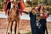 pexels adam b 3123690 1 180x120 - Morocco Camel Trekking 2D-3Days   Camel Safari Morocco