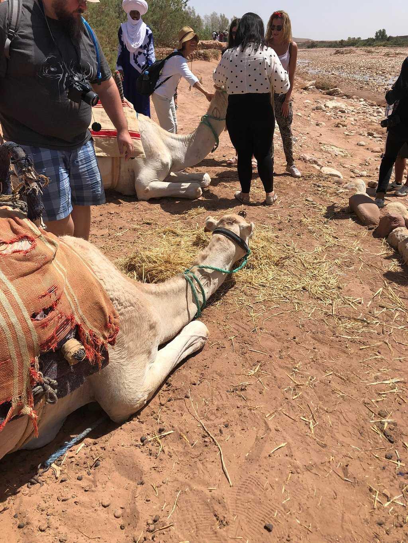 shared marrakech to fes desert tour 3 Days - Marrakech Airport Transfers